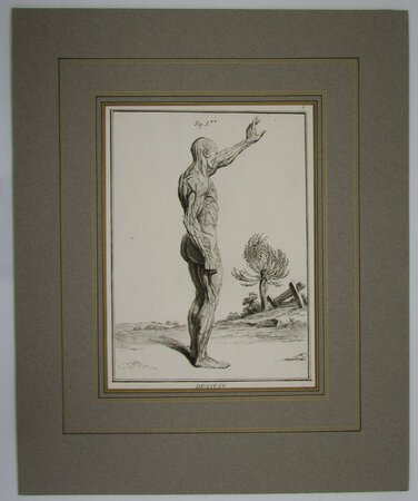 Three copper engravings - Human Anatomy. Fig 3. by BOILY, Charles-Ange