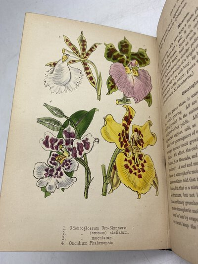 Cool Orchids and How to Grow Them by BURBIDGE, F. W.