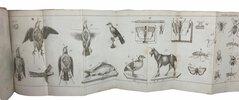 Another image of Manuels-Roret. Nouveau manuel pour le Naturaliste Préparatoire. by BOITARD, M.