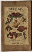 W. Belch's HISTORY OF FISHES & INSECTS. Price 6d cold.