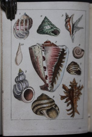 THE LITTLE CONCHOLOGIST; An Introduction To the Classification of Shells.  By the Rev. T. Wilson. by [CLARK, Samuel].