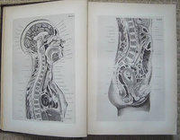 AN ATLAS OF TOPOGRAPHICAL ANATOMY by BRAUNE, Wilhelm.