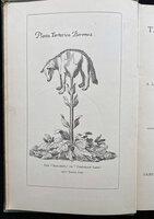 THE VEGETABLE LAMB OF TARTARY; by [PLANT MYTHOLOGY.] LEE, Henry.
