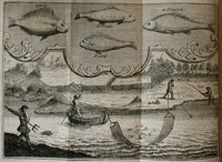 The Compleat Fisherman. Being a large and particular account, of all the several ways of fishing now practised in Europe; with abundance of curious secrets and niceties in the art of fishing, as well in the sea, as in lakes, meers, ponds, rivers or brooks; whether by darts, spears, harpoons, nets, hook and line, or any other way whatsover. More particularly calculated for the sport of angling. With directions for preparing the angle rods, lines, hooks, and baits, proper for every part of the sport respectively; and also for the angler's conduct in rightly applying them. Also, an account of all the principal rivers, lakes, &c. in England; and what kinds of fish are more especially found in them. Collected from the best authors, and from the long experience of James Saunders, Esq; of Newton-Awbery, upon the River Trent. by SAUNDERS, James.