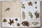 Another image of [Album of pressed flowers, plants and seaweeds]. by (BOTANY). CRESPEL, Albéric.