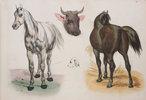 Another image of Nouvel Album de dessins mis à la portée de la jeunesse par divers auteurs. by (JUVENILE). [ADAM, Victor, CAROT and HUBARD, illustrators].