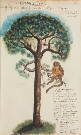Étude sur la transformisme [and] Dictionnaire botanique. by (NATURAL HISTORY). DUMOULIN.