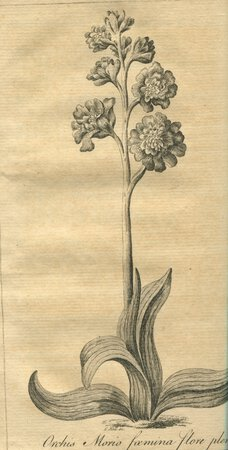 Plantae Favershamienses. A Catalogue of the more perfect Plants growing spontaneously about Faversham, in the county of Kent. With an Appendix exhibiting a short View of the Fossil Bodies of the adjacent Island of Shepey... by JACOB, Edward.