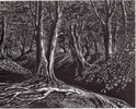 Another image of The Great Storm of October 1987 and its aftermath. Five Wood Engravings. by POOLE, Monica, DALBY, Claire, REDDICK, Peter, SMITH, Peter and TUTE, George. SOCIETY OF WOOD ENGRAVERS.