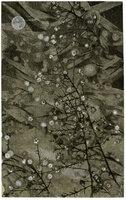 Bokeh. by SCHANILEC, Gaylord, 1955.