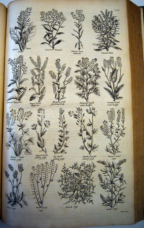 The British Herbal: An History of Plants and Trees, Natives of Britain, Cultivated for use, or Raised for Beauty. by HILL, John.