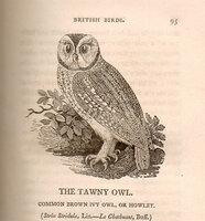History of British Birds. by BEWICK, Thomas.