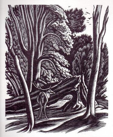 The Wood Engravings of Ethelbert White. by FLEECE PRESS. WHITE, Ethelbert. CHAPMAN, Hilary.