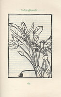 A Modern Herbal. by PEREGRINE PRESS. EVANS, Patricia. BARTON, Rick.
