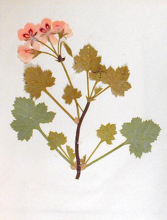 EXQUISITE PRESENTATION ALBUM WITH TEN DELICATE CUT PAPER FLOWER DESIGNS. by (Cut Paper Flower Collages)