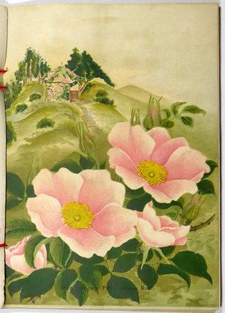 BULBS, PLANTS, SEEDS. DESCRIPTIVE CATALOGUE  1909-10 (cover title). by (Nursery catalogue, Yokohama) YOKOHAMA NURSERY CO., Ltd.