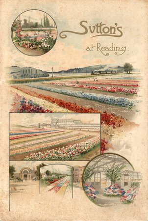Sutton's at Reading by [SUTTON'S SEEDS]