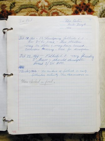 1966 A HORSE BREEDER'S BINDER w/150-200 Handwritten & Official Sheets w/ information on MARES BRED by Russell Smith