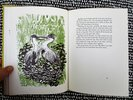 Another image of BLUE HERON TREE **SIGNED** Illustrated Children's Book GREAT BLUE HERONS NESTING HABITS First Edition 1968 by Edith Thacher Hurd